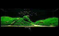 Акваскейп с родостомусами - Мои аквариумы - Галерея форума - AP