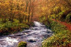 7 Bosques otoñales donde podrían habitar los Elfos del Hobbit | Blog de rutas de turismo rural