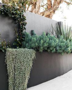 Backyard Pool Designs, Backyard Garden Design, House Landscape, Garden Landscape Design, Coastal Gardens, Landscaping Plants, Coastal Landscaping, Plantation, Garden Styles