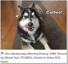 ☕ Your Wednesday Morning Perkup: 1789, Passed my Blood Test, 75 WSOs, Article to Video PLR, more!