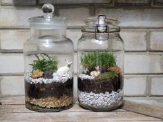 Stylish Bonsai Terrarium Ideas With Miniature Landscaping Jars - Here are few basic bonsai tips to get you going: For the best drainage, use a basic potting mixture of equal parts of peat, loam, and sharp sand.