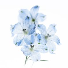 Fascinatingly Floral – Photography by Chihiro Otsu - Pondly