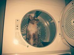 Bill the dryer cat