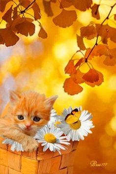 Kätzchen mit Schmetterling - Animation Telefon №1287855