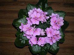 fokföldi_Babinszkiné Bohus Jolán Floral Wreath, Wreaths, Garden, Plants, Home Decor, Floral Crown, Garten, Decoration Home, Door Wreaths
