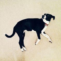 "O starenju, lekcija deseta: ""Nešto lepo"" | Nesto Lepo Boston Terrier, Dogs, Animals, Boston Terriers, Animales, Animaux, Pet Dogs, Doggies, Animal"
