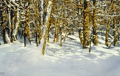 "light through the forest 11 22"" x 30"" micheal zarowsky watercolour on arches paper (private collection"