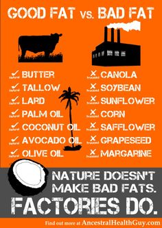 Good Fat vs Bad Fat [Infographic] | Ancestral Health Guy
