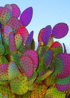 Cacti, love the colors