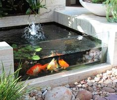 Outdoor koi pond with a glass front makes for easier viewing.