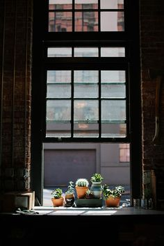 Potted succulents in a window