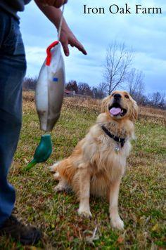Iron Oak Farm: Oliver Training Update