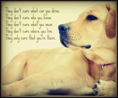 So true!! Dogs are the best!