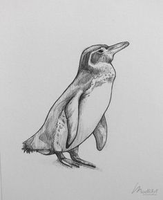 85 Simple And Easy Pencil Drawings Of Animals - Buzz Hippy Pencil Drawings Of Animals, Animal Sketches, Bird Drawings, Realistic Drawings, Drawing Sketches, Wild Animals Drawing, Tame Animals, Animals And Pets, Penguin Sketch