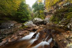 Old-Growth Forest - Saja-Besaya Natural Park, Cantabria. Spain