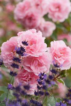 Beautiful pink and purple combination