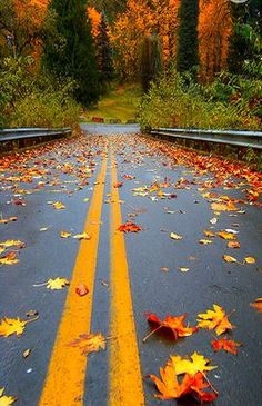 Red,Leaves,Autumn - Country road
