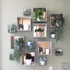 "54 Likes, 2 Comments - @priorychase_newbuild on Instagram: ""Wonder if I can persuade the OH to let me have a plant wall!  #plants #wall #livingroominspo…"""