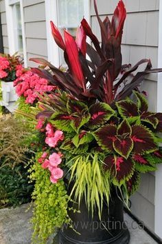 Gardening Container Container idea: canna lily, coleus, begonia or impatiens, and creeping Jenny. Oh, and something green and spiky for texture. Container Flowers, Container Plants, Container Gardening, Gardening Zones, Gardening Courses, Hydroponic Gardening, Vegetable Gardening, Organic Gardening, Outdoor Flowers