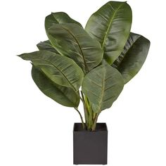 Real Touch Rubber Plant ($28) ❤ liked on Polyvore featuring home, home decor, floral decor, fillers, plants, flowers, objects, flower stem and flower home decor