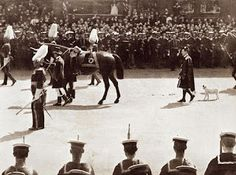 King Edward VII's Favorite: Caesar, the Wire Fox Terrier following behind in the funeral procession of the King.