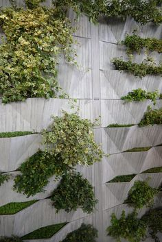 Green wall - now that's a privacy wall. I could see this between my backyard and the alley, with plants on both sides. Flowering ones even. Landscape Walls, Urban Landscape, Landscape Design, Concrete Wall, Concrete Planters, Concrete Facade, Wall Planters, Precast Concrete, Plant Wall