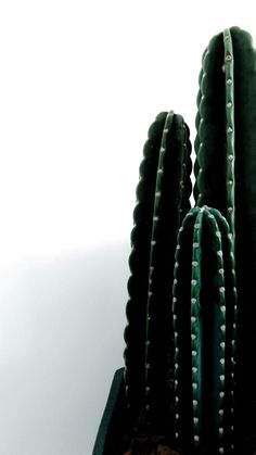 - Creative Cacti Decor - Cactus at home /Green! - Creative Cacti Decor - Cactus at home / Trendy Wallpaper, Tumblr Wallpaper, Cute Wallpapers, Wallpaper Backgrounds, Wallpaper Ideas, Iphone Wallpapers, Colorful Wallpaper, Wallpaper Quotes, Perfect Wallpaper