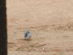 dove on the floor by Escritor Emanuel Carvalho