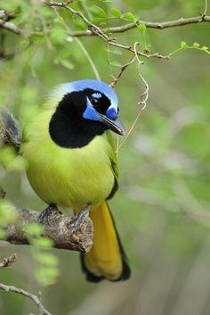 tiny-creatures:  Laguna Atascosa Green by www.ryanaskren.com on Flickr.