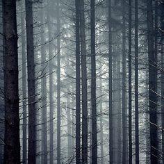"59 Likes, 2 Comments - Marianne Spenner Häusling (@marianne_prisma_) on Instagram: ""Forest_#divine_forest #wood #Kellerwald #prisma #galerie_landluft_nordhessen…"""