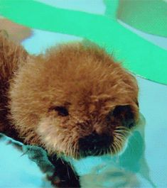 (click to see amazingly cute gifs) A whole otter level of cuteness…