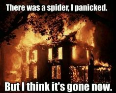 Spiders, totally justified @Brittany Horton Carroll is your renters insurance up to date?? lol