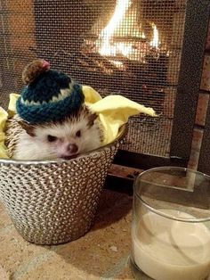 Mimi, the hedgehog in a knit hat, likes almond milk