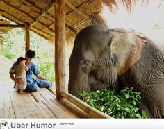 Father introducing his son to an elephant | Funny Pictures, Quotes, Pics, Photos, Images. Videos of Really Very Cute animals.
