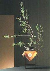 遠州・華道 花形の特徴 生花