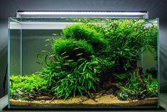 """1,966 Likes, 8 Comments - Aquascape (@aquascapenl) on Instagram: """"Such a beautiful scape ------------------------------------------------ #aquascape #aquarium #aqua…"""""""