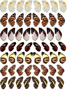 Printable butterfly wings, for altered art and collages, etc.