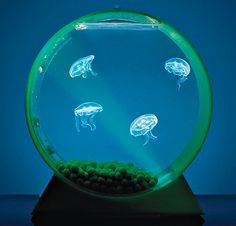 Aquarium for jellyfish. Jellyfish Tank, Jellyfish Aquarium, Aquarium Fish, Aquarium Air Pump, Saltwater Aquarium, Freshwater Aquarium, Aquascaping, Pictures Of Sea Creatures, Beautiful Butterflies