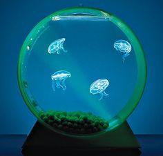 A Conversation Piece on Desktop Jellyfish Tanks -- Oh. My. Word.