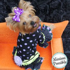 My Yorkie Puppy Pajamas! Dog, small dog