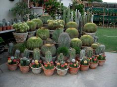 Preparing Your Garden Soil For The Healthiest Plants Raised Vegetable Gardens, Vegetable Garden For Beginners, Gardening For Beginners, Vegetable Gardening, Sprouts Vegetable, Cacti And Succulents, Planting Succulents, Decoration Cactus, Cactus Plante