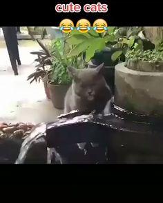 cute cats #trendscat #cat #cats #catlovers Funny Cute Cats, Cute Baby Cats, Silly Cats, Cute Cat Gif, Cute Little Animals, Cute Funny Animals, Crazy Cats, Funny Baby Memes, Cute Funny Baby Videos