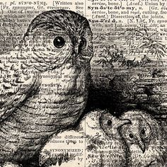 SNOWY OWL & OWL Babies vintage dictionary art print book page print on vintage dictionary page 8x10. $9.00, via Etsy.