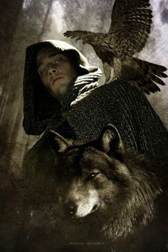 The falcon and the wolf