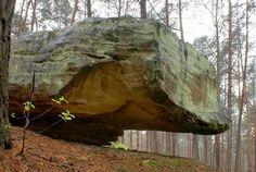 """Grzyb skalny. Rezerwat """"Skały w Krynkach"""". Lokalizacja: http://maps.google.pl/maps?daddr=51.001387,21.182914=pl=50.9982,21.184044=0.044186,0.077162=h=mift=1=14=14"""