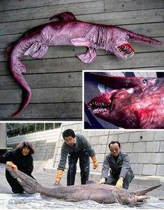 Amazing Rare Animals