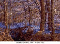 Magic wood blue. Unusual mystical nature. Young foliage and grass. Photo wall-paper, card