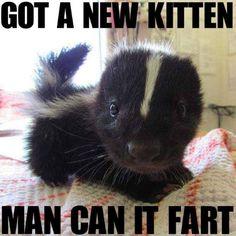 Animal Funnies. :) http://ibeebz.com