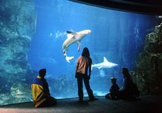 Experts from the National Marine Aquarium (pictured), Plymouth University and the University of Exeter have found watching tropical fish swim around a tank can help lower blood pressure and heart rate and boost mood