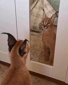 Cute Little Animals, Cute Funny Animals, Cute Cats, Funny Cats, Funny Birds, Cute Animal Videos, Funny Animal Pictures, Funny Animal Memes, Cat Memes